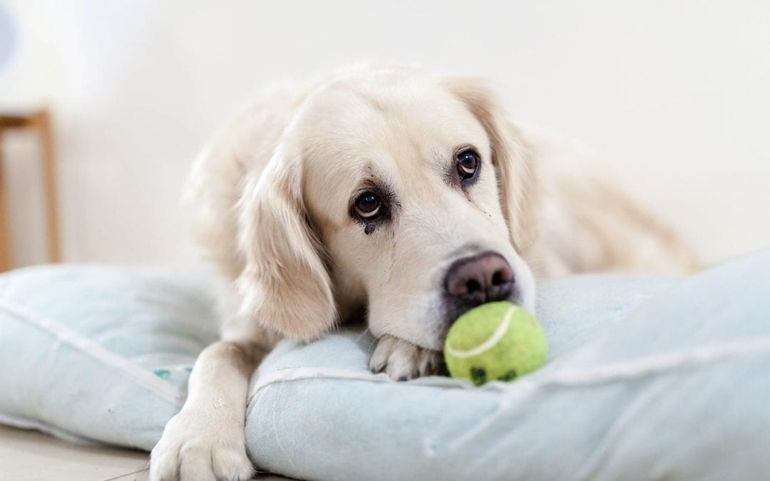 4 Preventable Pet Diseases